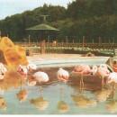 Flamingoteich
